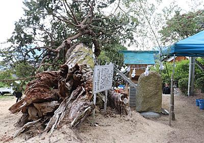ビャクシン保存工事完了祝い・藤原神社落慶式 | 裏島(うらしま)ぶろぐ