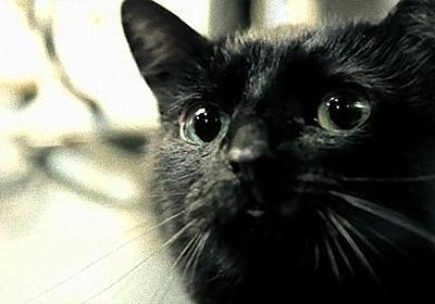 「シュレーディンガーの猫」実験を再現したら衝撃の結末が!ショートフィルム「シュレーディンガーの箱」 : カラパイア