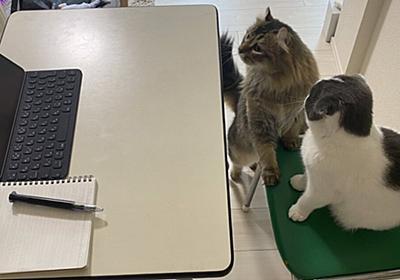 トイレに行っている間に席がない!web会議に出る気満々の猫さんの姿をご覧ください「モチベーションがすごい」「会議が和むと思う」 - Togetter