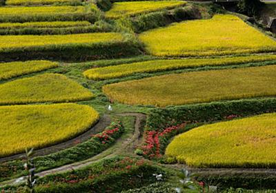 稲刈りシーズン金色の奈良県明日香村で彼岸花を撮影。撮影スポットなどを紹介します。 - 暮らしの顛末(くまくまコアラ)