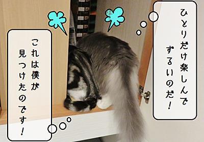 猫雑記 ~悪戯すずめの押入れ探検参戦~ - 猫と雀と熱帯魚