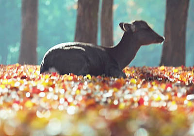 落ち葉に座ってるだけのシカの映像、でも珍しいモノが見えてるせいでずっと見てられる「視覚的快楽がある」 - Togetter
