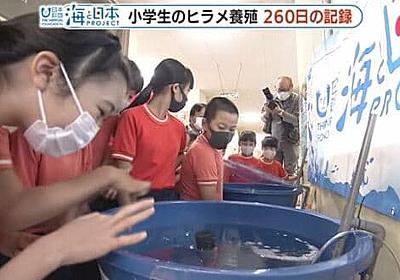 名前を付けて育てたヒラメを食べられる?海に逃がしたい…小学生が命の授業で260日後に下した決断