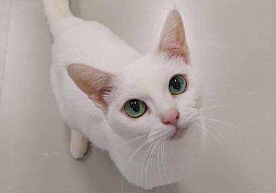 人間の年齢で100歳に相当する美魔女猫の「あなご」が逝去、18日までお別れの場を提供中 | Cat Press