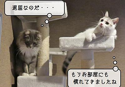 猫雑記 ~ところ変わっても・・・~ - 猫と雀と熱帯魚