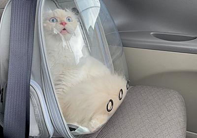 病院に行くと気づいてしまいショックを受けている猫さんがかわいすぎる→犬猫の気づいてしまった顔集