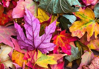 【秋服・コーディネート】ダークで重くなりがちな「秋の服」をオシャレに見せるポイントは、この4色の取り入れ方 - 南国シンプルライフ