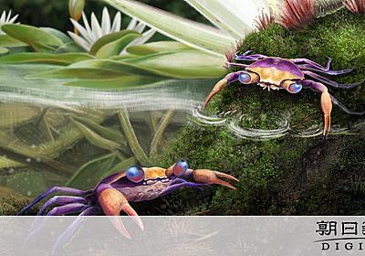 琥珀の中から「最も完全なカニ化石」 恐竜時代の白亜紀の祖先:朝日新聞デジタル