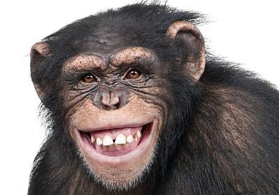 チンパンジーはアフリカやインドの民族音楽が好き:実験結果 WIRED.jp