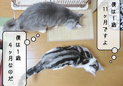 猫雑記 ~2019年9月の猫様体重測定~ - 猫と雀と熱帯魚