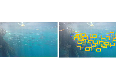 マグロ養殖をAI・IoTで効率化、双日が実証実験 - 日経テクノロジーオンライン