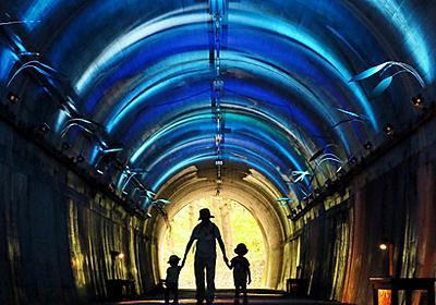 青のトンネルでひんやり一休み 神戸市立森林植物園:朝日新聞デジタル