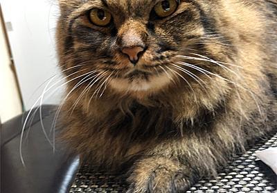 ハロウィン - えと的日常〜猫がブログ始めました〜