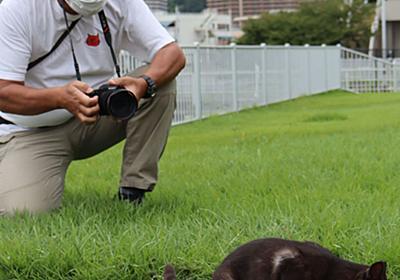 湖畔で生きる「びわこ猫」を追いかけて 共生の願い込め、愛猫家のカメラマンが写真展|社会|地域のニュース|京都新聞