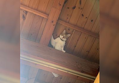 天井から飼い主を見つめる猫ちゃんに様々な事を思う人々「新しい監視方法」「緊張感w」 - Togetter