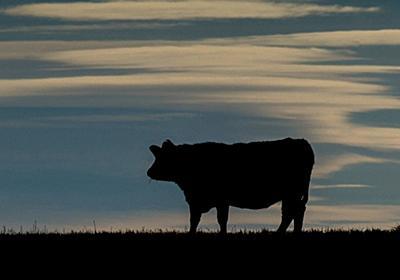 CNN.co.jp : 英スコットランドの農場でBSE確認、食品の流通網には入らず
