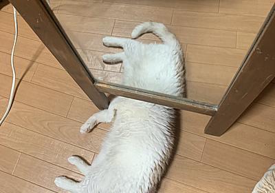 猫が鏡の下で寝た結果→モフモフかわいい「未確認生命体」が目撃される - ねとらぼ