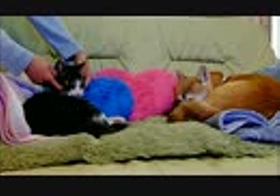 柴犬いちごと猫ミルキー 朝のひとなで