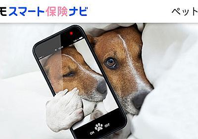留守中でも安心!ペットの様子をスマホで見守れるペットカメラを徹底解説│月刊ペットニュース|ペット保険のNTTイフ
