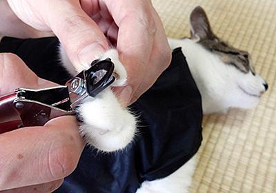 猫の爪切りお助けグッズで「世界一爪切りしやすい猫」は作れる! - 価格.comマガジン