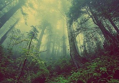 植物は見ている。 植物に残された痕跡から森の中の遺体の場所を見つけ出す「法植物学」(米研究) : カラパイア