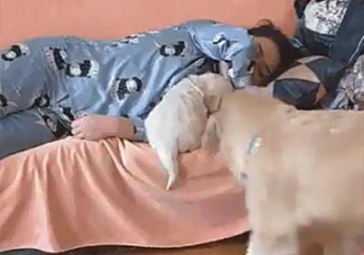 飼い主の隣でどうしても寝たい大きな犬。だけどそこにはすでに小さな犬が...そこで大きな犬はラブリーな方法を考えた : カラパイア