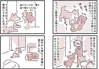 【犬マンガ】うちに柴犬が来た。 - こぐま犬と散歩〜元保護犬の漫画日記〜