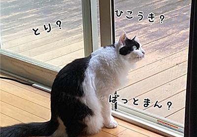 オットの努力 - 福ふく堂 -猫のおもちゃ箱-