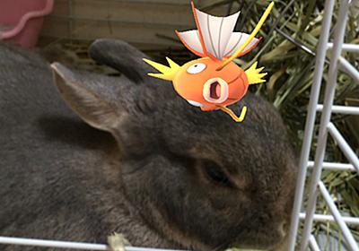 (●゚◇゚●)【ポケモンGO】八景島シーパラダイスには、レアなポケモンや巣がいっぱいあった! - ちなヤクうさぎのもんたんのポール際