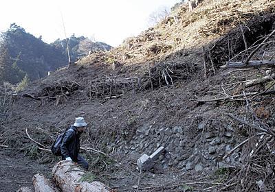 絶滅危惧種:シダ植物自生地ほぼ壊滅 公益財団法人が伐採 - 毎日新聞