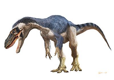 岩手県久慈市で発見 ティラノサウルス類の歯化石 – 早稲田大学