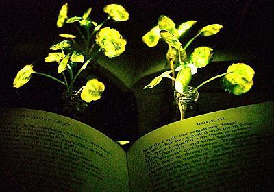 植物にナノ粒子を埋め込んで「人工発光植物」を作ることに成功 - ナゾロジー