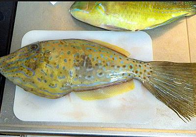 猛毒の魚が売られていて、しかも食べちゃったらしい( ゚Д゚)…「おしょぶ~present真夜中の雑談室281夜」年末年始限定増刊号^^(12/1~1/3) - おしょぶ~の~と