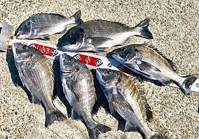 【紀州釣り】三連休最後の日に淡路島で秋チヌを釣ってきました | 淡路島を愛する紀州釣り師〜茅渟富団子屋〜