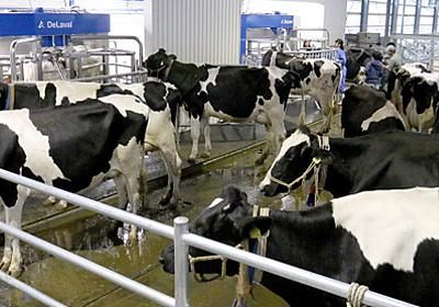 最新鋭「搾乳ロボ」で24時間化 北海道のハイテク牛舎:朝日新聞デジタル