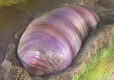 5億年以上前の地球に存在、『ほぼ全ての動物の祖先』の化石が発見される | VAIENCE