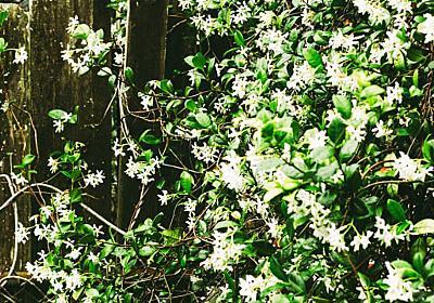 古代のファラオも現代人も魅了する「植物の香り」3000年の秘密(NOMA)   ブルーバックス   講談社(1/3)
