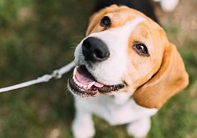がんの有無を100%の精度で判別する犬が登場 - GIGAZINE