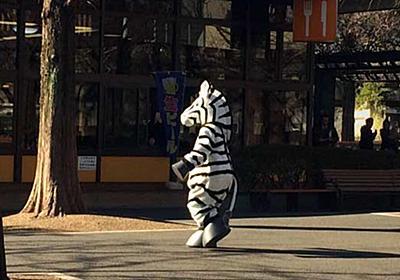 【訓練】上野動物園で二足歩行のシマウマが園内に脱出、麻酔銃で撃たれ無事確保 その一部始終がユルくて微笑ましい - Togetter