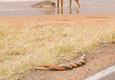 「サメをビーチで襲いながら蛇の交尾を見てる犬の画像」にカピバラが加わり大喜利に