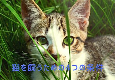 猫を飼うための4つの条件とは - ノル猫ラテちゃんの気ままBLOG
