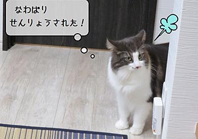 猫雑記 ~ステイホーム盆休みのお楽しみDIY~ - 猫と雀と熱帯魚