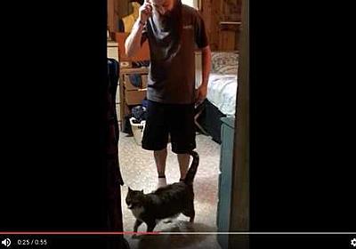 行っちゃダメにゃ! 飼い主を「通せんぼ」しまくるネコが可愛すぎる動画 - ニュースパス