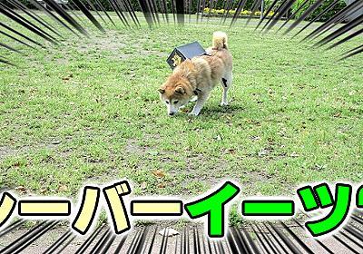 柴犬が配達する「シーバーイーツ」が爆誕! :: デイリーポータルZ