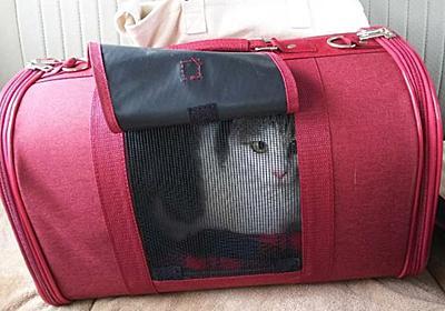 #313 動物病院とお薬が好きな猫…!?【日記】 - ヘッポコ専業主婦と見守りおじさん。