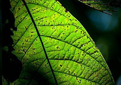 葉を撮影すると木の名前がわかるiPhoneアプリ|WIRED.jp