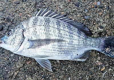 釣果報告😄 - キットキトの毎日