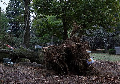 台風19号の被害に遭われた方へお見舞い申し上げます。 | 孝信s Photoブログ