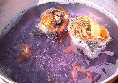 ヤドカリが背負ってる貝についてるイソギンチャクがおいしい :: デイリーポータルZ