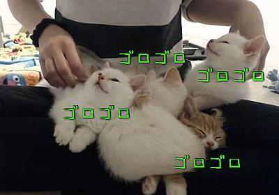 「子猫を5匹同時にゴロゴロさせてみるとね…こんな音がするんだ」(動画):らばQ
